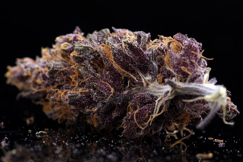 Buckey Purple Head Stash Horticulture -46