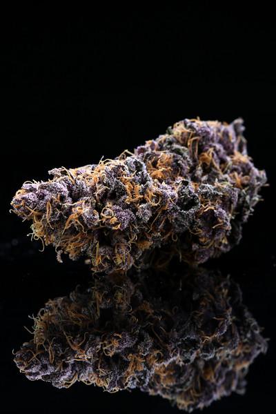 Buckey Purple Head Stash Horticulture -17