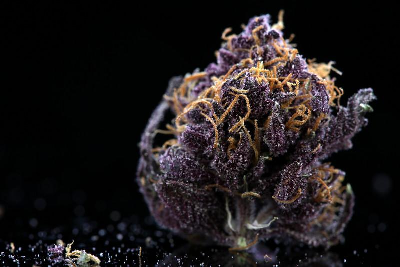 Buckey Purple Head Stash Horticulture -37