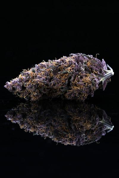 Buckey Purple Head Stash Horticulture -2