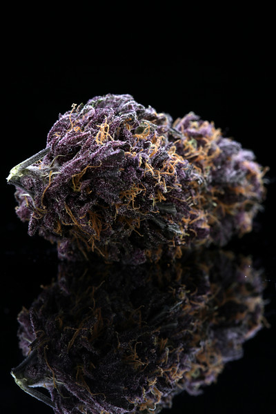 Buckey Purple Head Stash Horticulture -9