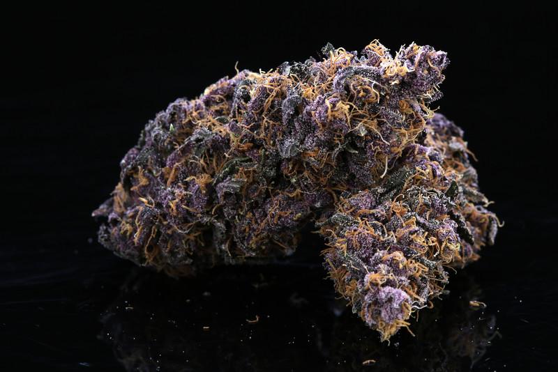 Buckey Purple Head Stash Horticulture -31