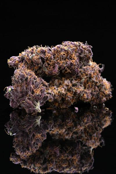 Buckey Purple Head Stash Horticulture -20