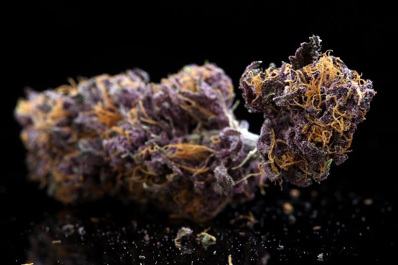 Buckey Purple Head Stash Horticulture -36