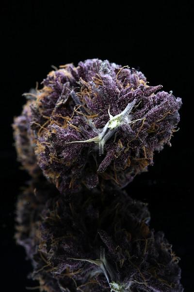 Buckey Purple Head Stash Horticulture -7