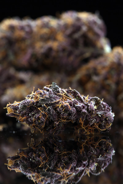 Buckey Purple Head Stash Horticulture -23