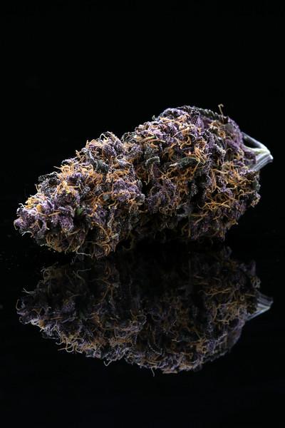 Buckey Purple Head Stash Horticulture -3