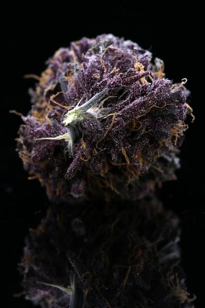 Buckey Purple Head Stash Horticulture -8