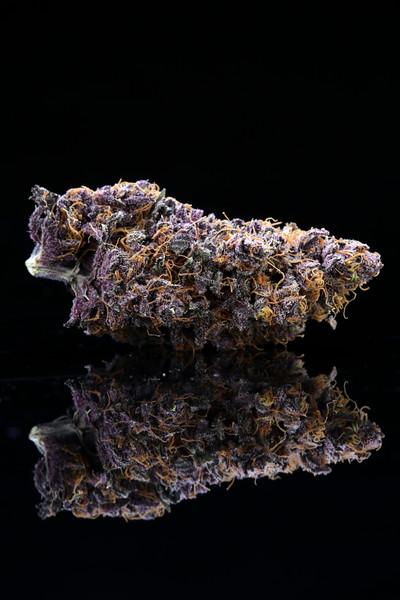 Buckey Purple Head Stash Horticulture -15