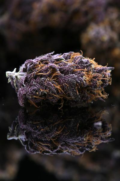 Buckey Purple Head Stash Horticulture -28