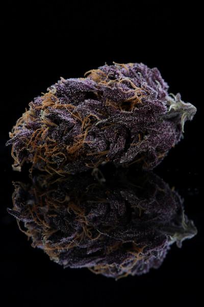 Buckey Purple Head Stash Horticulture -12