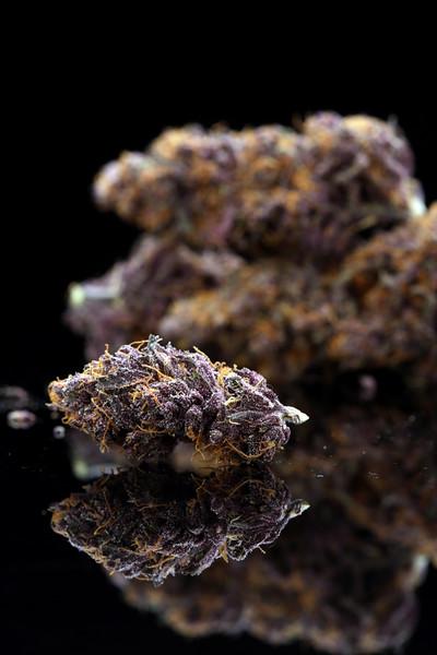 Buckey Purple Head Stash Horticulture -22