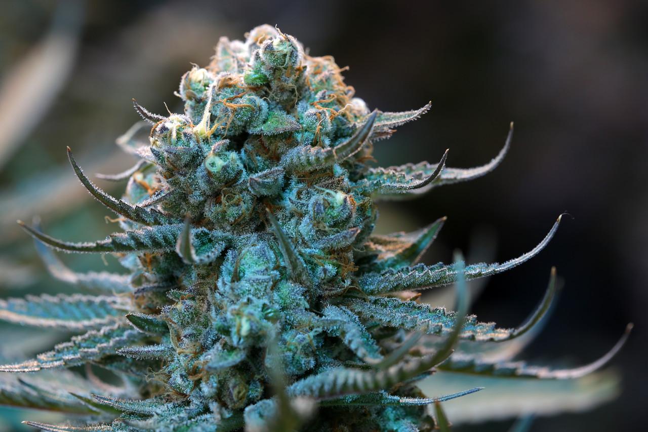 Blue Cookies -6