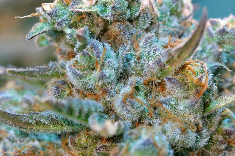 Blue Cookies -5