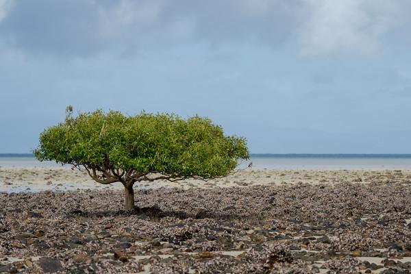 MMPI_20200908_MMCK0074_0001 - A lone mangrove tree on a rocky sandbar.