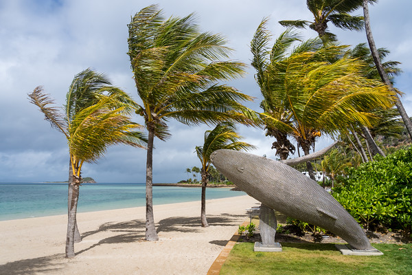 MMPI_20200908_MMCK0074_0002 - A whale sculpture amongst palm trees on the beach.