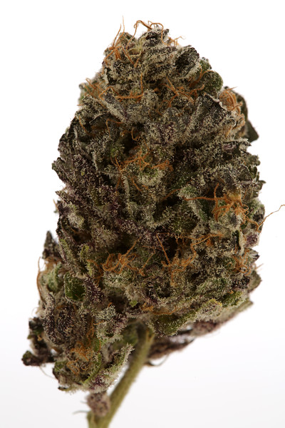 BR4A1505 BB PURP