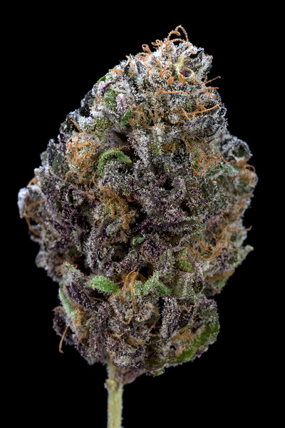 BR4A0523BB PURPS