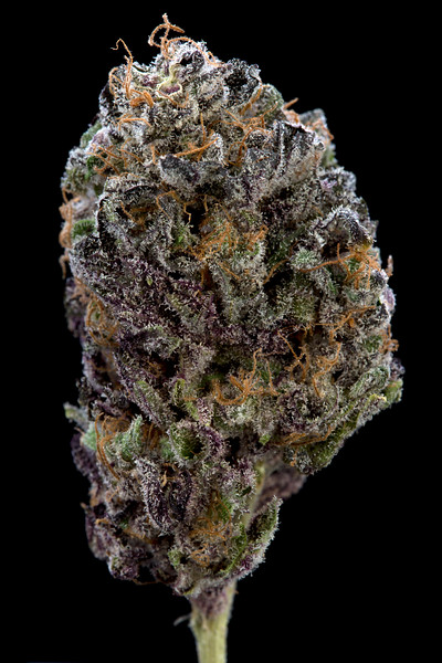 BR4A0524BB PURPS