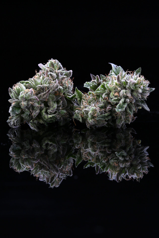 BR4A2365 Gelato ( MultitopFarms ) copy