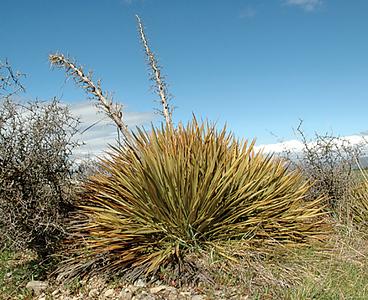 Omakau to Wedderburn - Spaniard, wild irishman