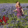 Sunday bluebonnets_0013