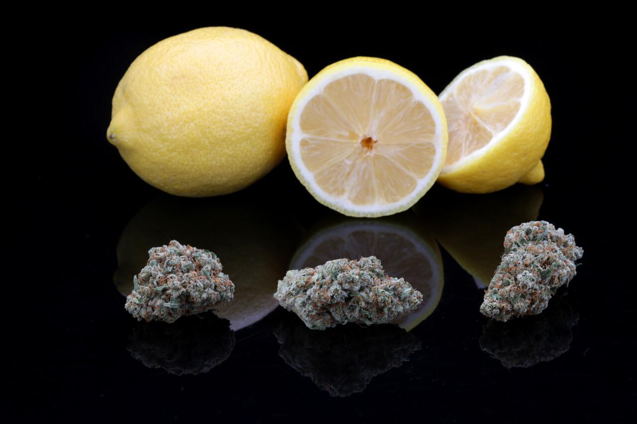 BR4A1924 Gold Lemon SugarTop Buddery copy