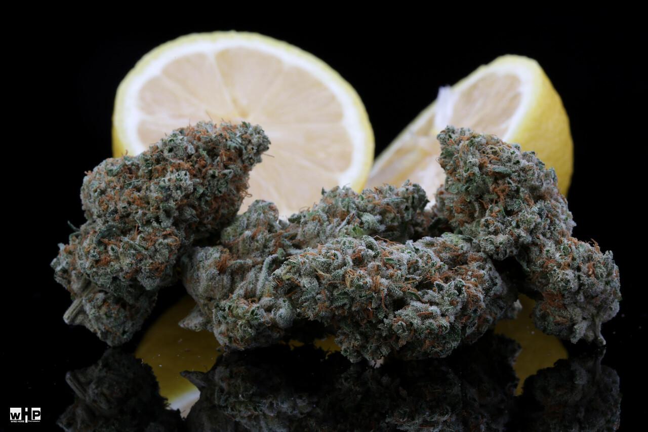 BR4A1881 ig Gold Lemon copy