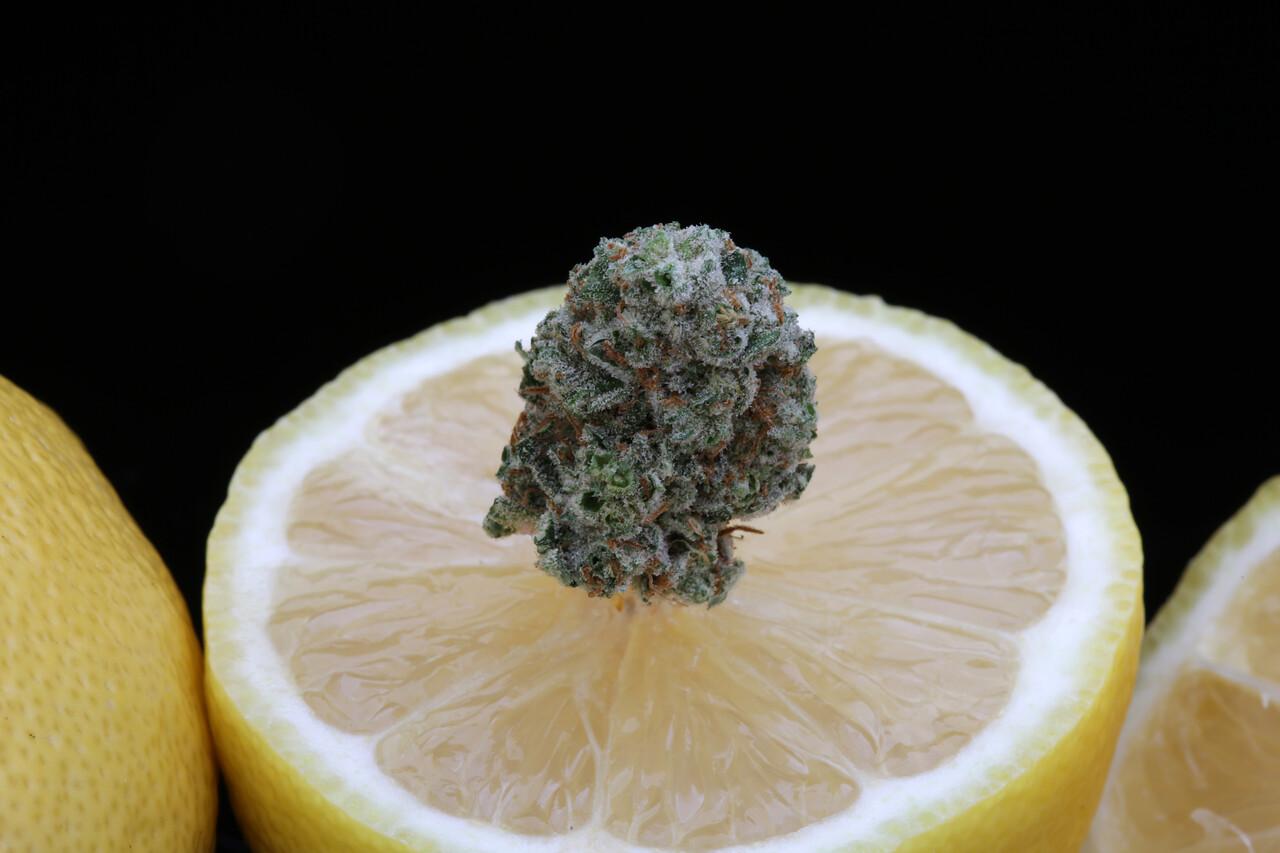 BR4A1930 Gold Lemon ( SugartopBuddery ) copy
