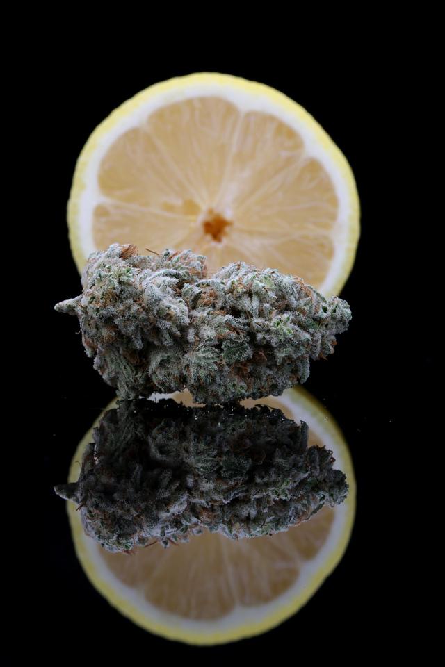 BR4A1900 Gold Lemon Sugartop Buddery ( Wind Home Photography ) copy