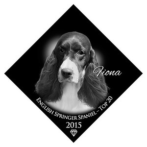 English Springer Spaniel Top 20  2015