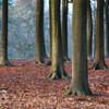 VWParkTrees 0561-