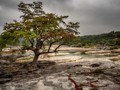 Cypress at Pedernales Falls