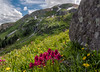"""Indian Paintbrush with """"Bobby"""" Falls in the background - Black Bear Pass Road, San Juan Mountains, Colorado - Mark Gromko - July 2015"""