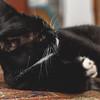 Black Cat Rescue