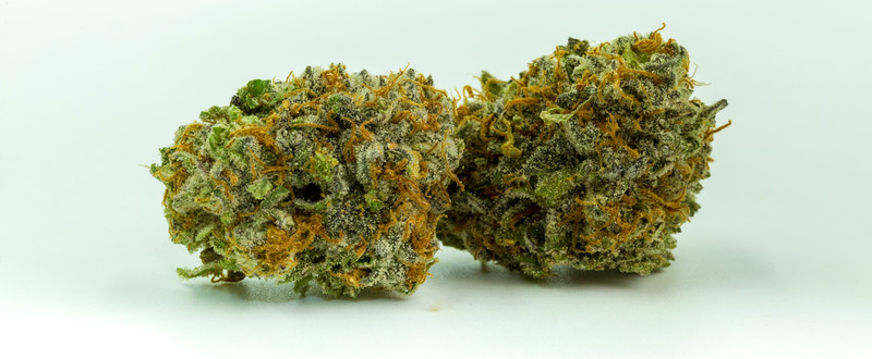 purple punch-3084