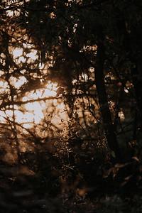 Sunrise-8994