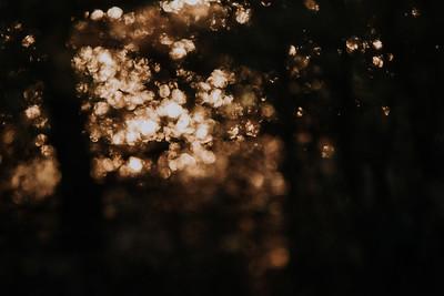 Sunrise-9010