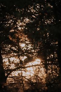 Sunrise-8995