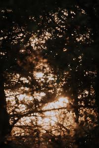 Sunrise-8992