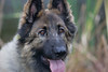18_9645GSDCL_PAW