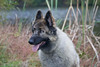 18_9633GSDCL_PAW