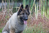 18_9642GSDCL_PAW