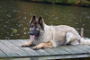 18_9661GSDCL_PAW