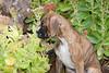 Pups_0642_Bxr_KR_PAW