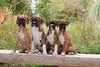 Pups_0440_Bxr_KR_PAW