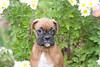 Pups_0601_Bxr_KR_PAW
