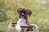 Pups_0413_Bxr_KR_PAW
