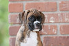 Pups_0495_Bxr_KR_PAW