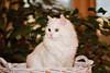 _5517_Cat_ARhlff_PAW